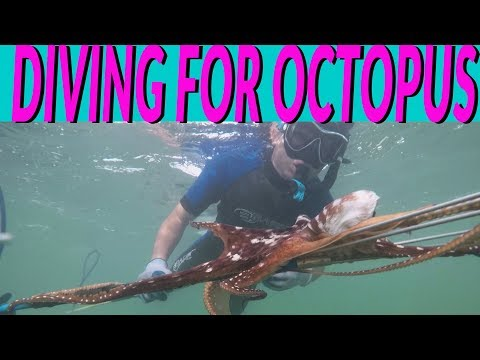 KIDS DIVING For OCTOPUS In HAWAII - Show You HOW And WHAT To LOOK For