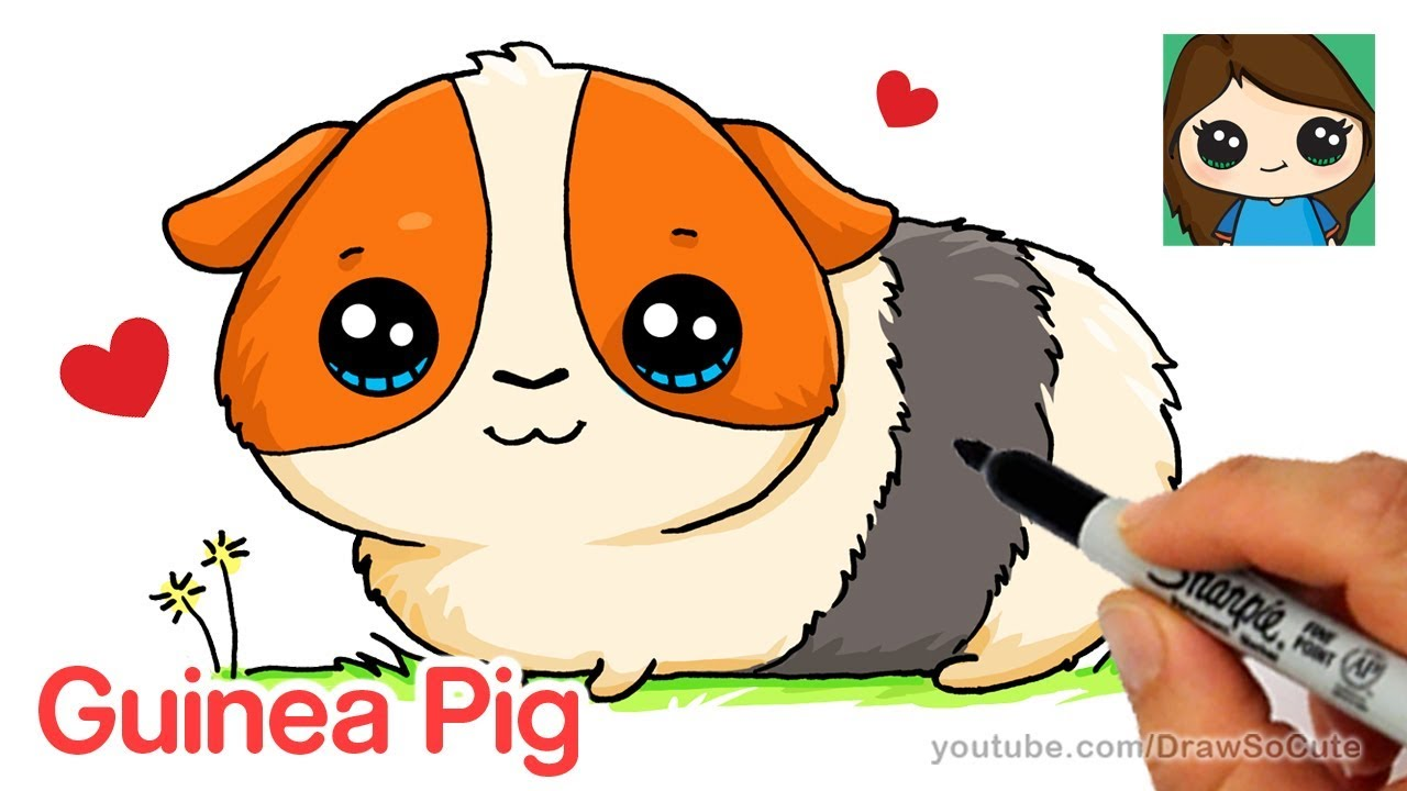 How To Draw A Guinea Pig Easy And Cute Youtube
