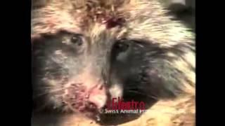 Fur Farming: Project Furget Fur