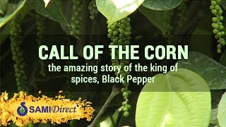 Call of the Corn, the amazing story of the king of spices, Black Pepper  | Sami Direct