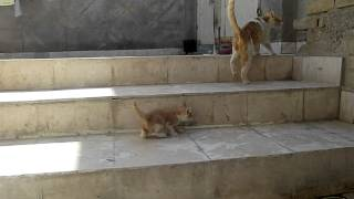 Mummy Cat Saved Her Kitten by Transfering Home