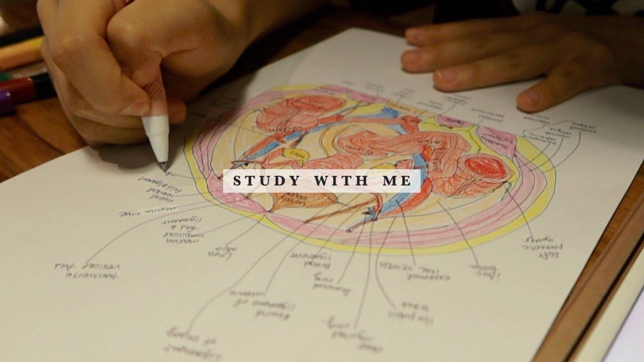 Study with me | 의대생이랑 같이 공부해요!👩🏻⚕️(50분, 카페 백색소음)