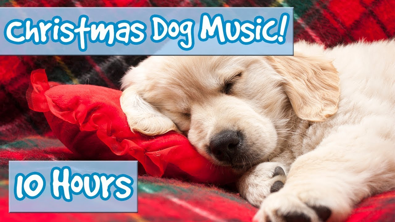 merry christmas therapy music for dogs calming christmas music for dogs in the holiday season
