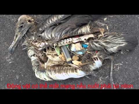 Ảnh hưởng của túi nilon và phế phẩm nhựa đến môi trường xung quanh