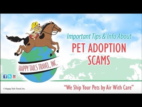 Tips To Avoid Pet Adoption Scams | Happy Tails Travel
