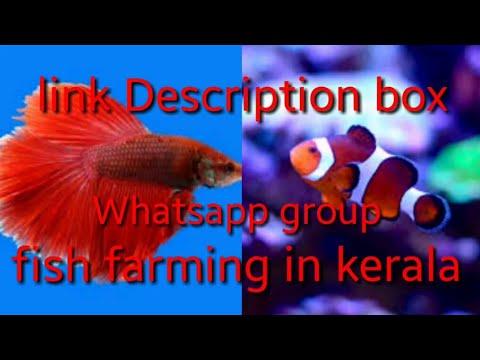 Whatsapp group fish farming in kerala 2