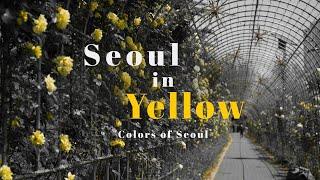[Colors of Seoul] 유채꽃이 만발한 봄의 끝 무렵, 서울의 색은? Yellow!