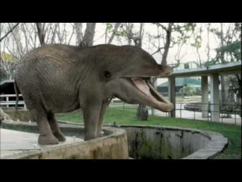 Funny Mixed Up Animals - YouTube