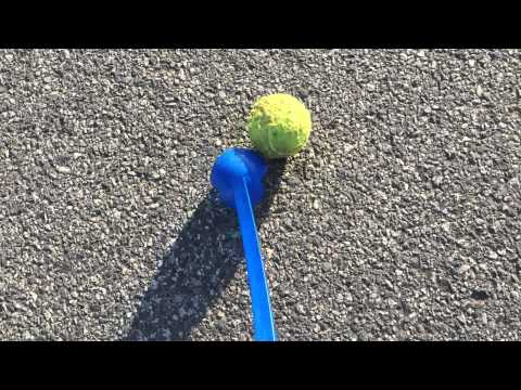 Nox - The Australian Kelpie - Safety Around the Roads