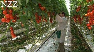 Tomaten zum Rotwerden (NZZ Format 2009)