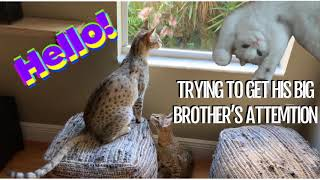 Funny Cats Playing