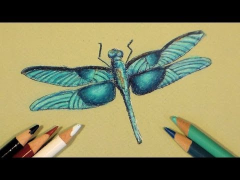 Dragonfly In Colored Pencil Tutorial Youtube