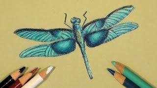 dragonfly in colored pencil tutorial