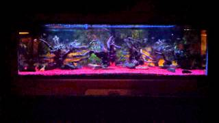 Current Satellite Freshwater + Led Aquarium Light