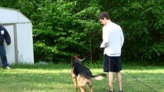 Protection Training Charlie German Shepherd  May 2011