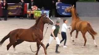 #Драка жеребцов, #лошади опасные и смешные #ИППОсфера УРА! Миллион просмотров!