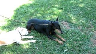 2) Flicka At All Star Dog Training