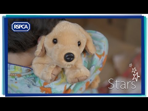 Stars - the RSPCA Christmas advert 2017