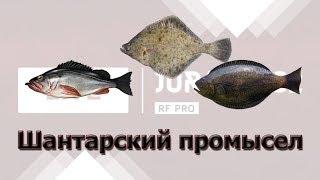 Русская Рыбалка 3.99 Шантарский Промысел. Ночной стрим