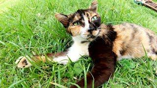 ベンチで眠る茶シロ猫と草のベットでくつろぐ三毛猫