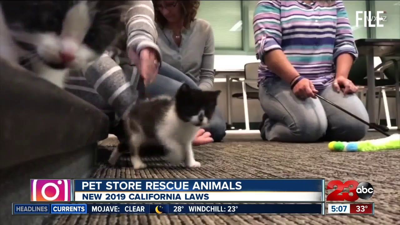New laws in California about pets