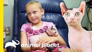 Adorable 'Dwelf' Cat Brings A Smile To Young Cancer Patients' Faces | Cats 101
