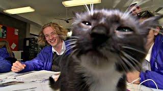 Кошки помогают студентам снять стресс после экзамена (новости)