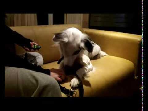 collier vibrant pour chien sourd