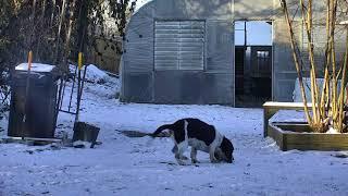 Outside Dog Yard Cam 01-18-2018 06:00:12 - 07:00:13