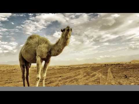 Damascus Arabic Club Music Mix Middle Eastern Music 2016