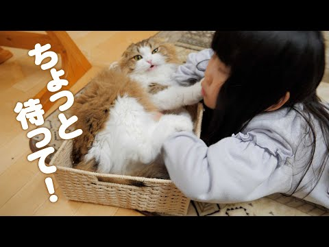 どうしてもオヘソが見たい娘VSイライラしつつ受け入れる猫