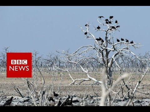 Pilcomayo River: Can this 'suicidal' river be tamed? - BBC News