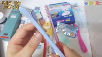 [강아지 관리] 제13탄 - 칫솔 고르는 법 - Toothbrush for pets