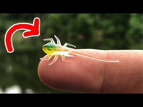 This TINY Lure Caught Me A NEW PB!!!