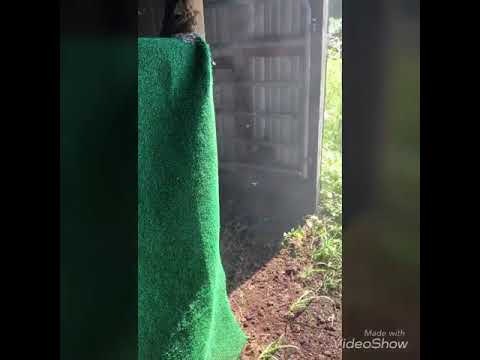 8 Ft Wasp Nest Found In Barn Boing Boing