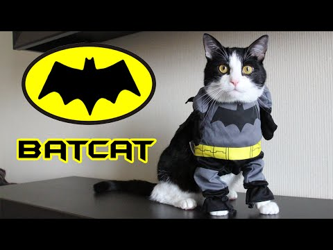 BATCAT – a new mission CAT PUSIC