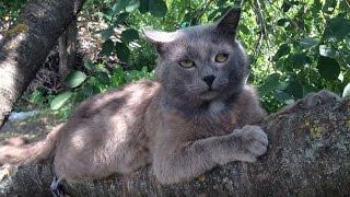 Умер кот! Любимый кот умер!