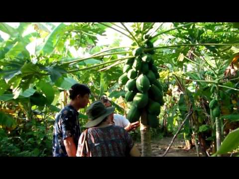 Tropical Fruit Jungle in Bình Thuận Province Near Phan Thiết City