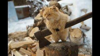 貓 Выпуск № 3 ДОМАШНИЕ КОШКИ-УБИЙЦЫ !!! (Cat-Hunters) - СОНИК И МИШЕЛЬ ПРЕДСТАВЛЯЮТ