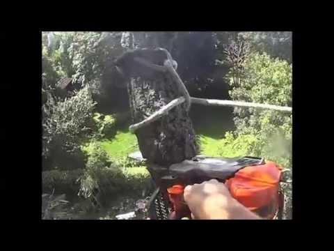 Cutting down a 100ft Willow Tree ( Husqvarna 540xp ) Sony AS30