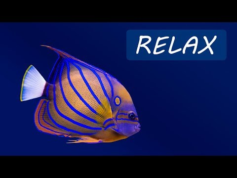 Relaxing Music and Underwater Scenes  24/7 Calming Music
