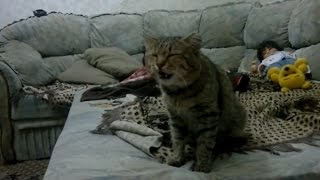 Приколы с котами 2016 коты чихают новые подборки Которолик выпуск 13 смешные коты