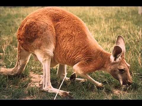 Australia, Natural Resources, Wildlife ans Tourism