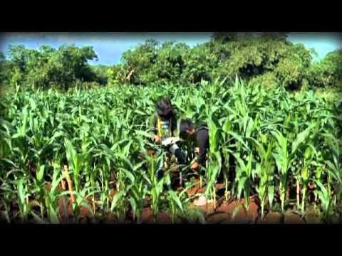 Agronomi dan Hortikultura IPB