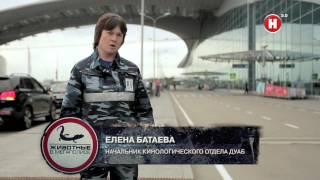 Собачьи профессии / Григорий Манёв / Моя Планета - Детектор