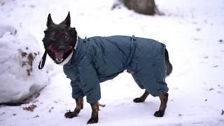 Одежда для собак крупных пород. Какую одежду выбирать для собаки зимой. Теплый Комбинезон Сиберия.