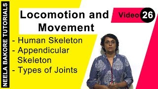Locomotion and Movement - Human Skeleton - Appendicular Skeleton - Types of Joints
