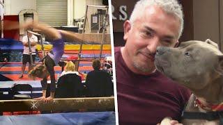 Cesar Millan's Dog Bit Gymnast and Killed Actor's Dog: Lawsuit