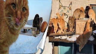 #2 Кошки и Молоко Frost, Winter, Koshlandia, Siberian Farm cats, Деревенские кошки