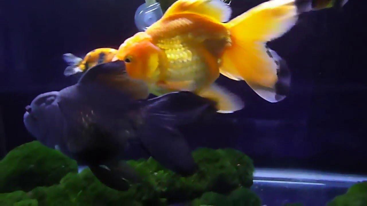 Fish aquarium in ecr - Ecr 5 4 16 005